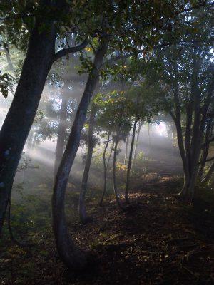 御嶽山ブナ林